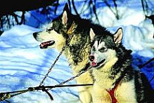 Dogsledding - Termas de Chill�n